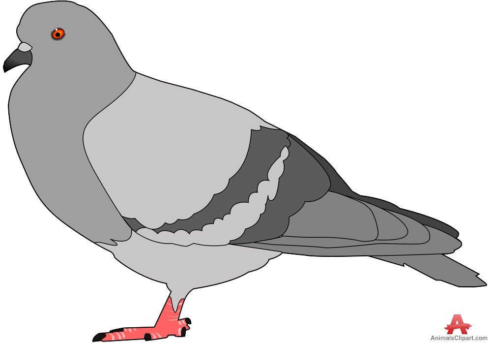 Fat pigeon bird clipart free clipart design download