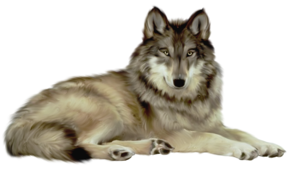 Transparent wolf clipart 0