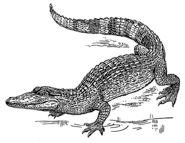 Cute alligator clipart free clipart images the cliparts clipartix