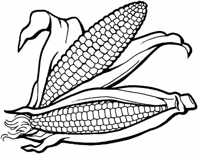 Corn clipart to download dbclipart