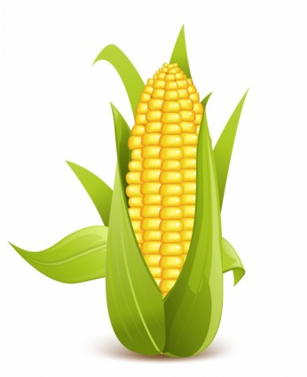 Corn sweetrn clipart clipart kid 2