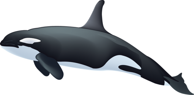 Free whales clipart free clipart graphics images and photos 2 2