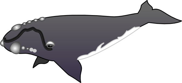 Whale clipart and illustration 2 whale clip art vector image 5 3 3