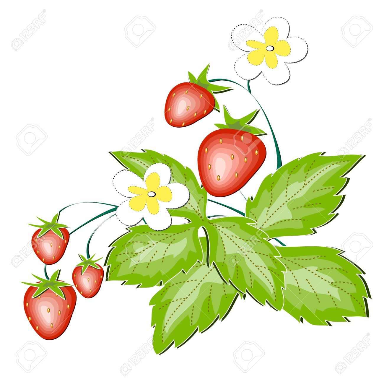 Wild strawberry clipart