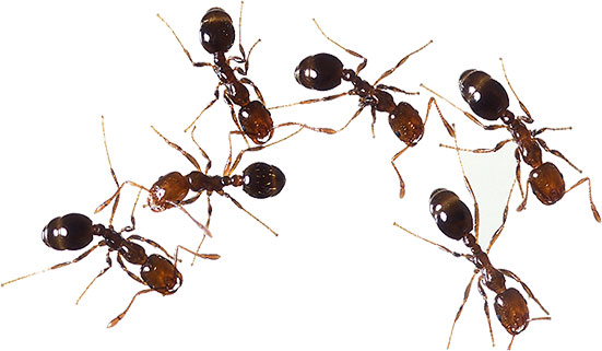 Animated ants ant clipart free
