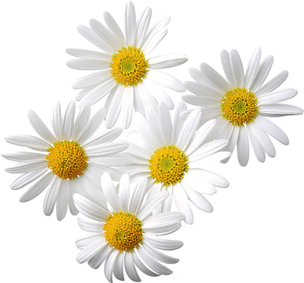 Free daisy clipart public domain flower clip art images and 2 2