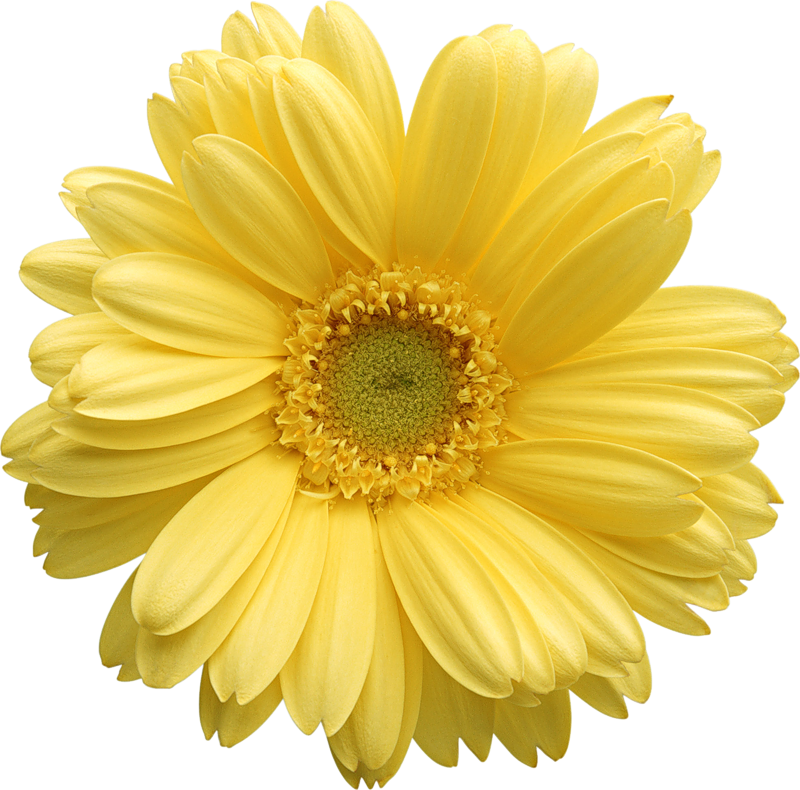 Free daisy clipart public domain flower clip art images and 2 4 3