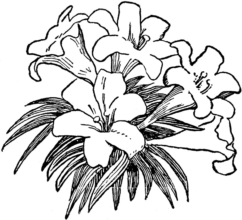 Flower  black and white flower black and white flower clipart 5 image