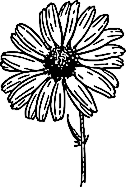 Flower  black and white small flower black and white clipart kid