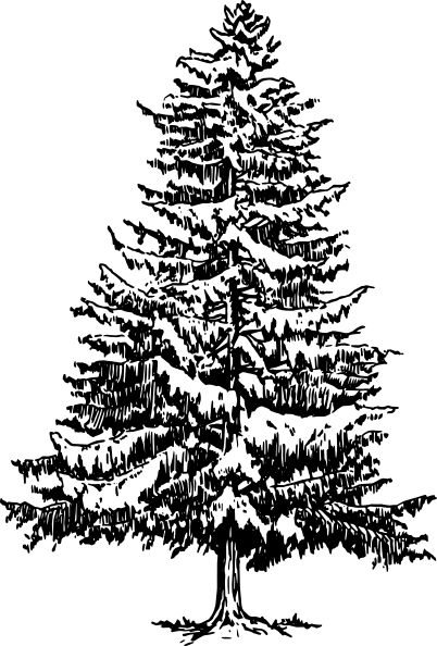 Pine tree clip art and on