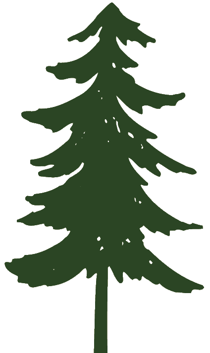 Pine tree clipart kid 2