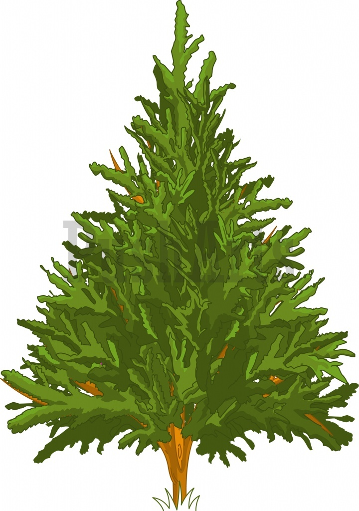 Winter pine trees clipart kid