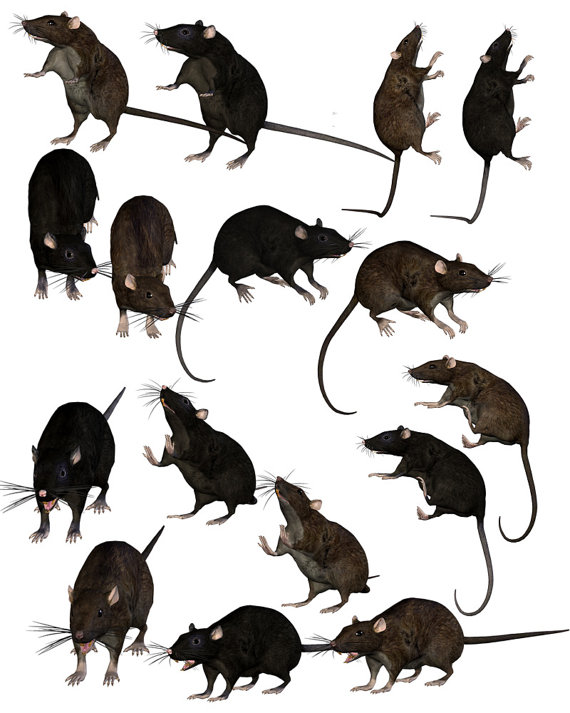 Clipart tan rat clipartfest