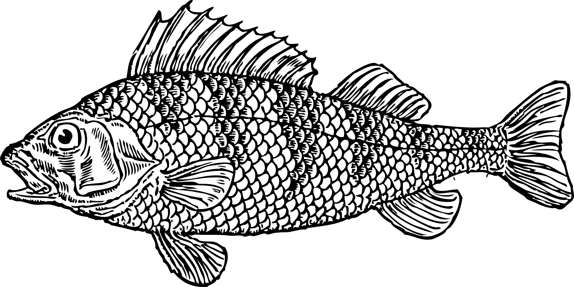 Fish  black and white fish black and white clipart kid 2