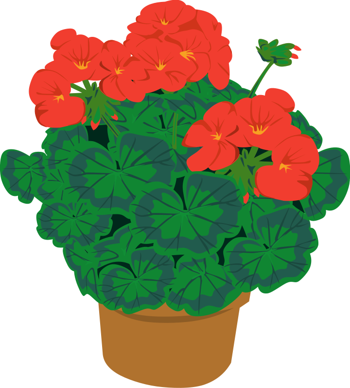 Flower potted plant clipart kid