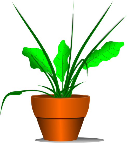 Growing plant clipart free images 3