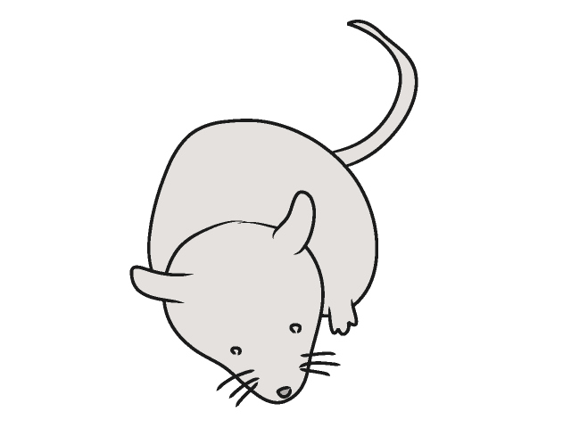 Mean rat clipart 4