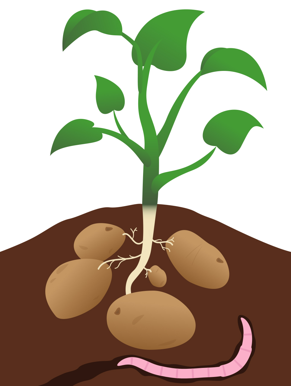Plant cartoon clip art clipartfest