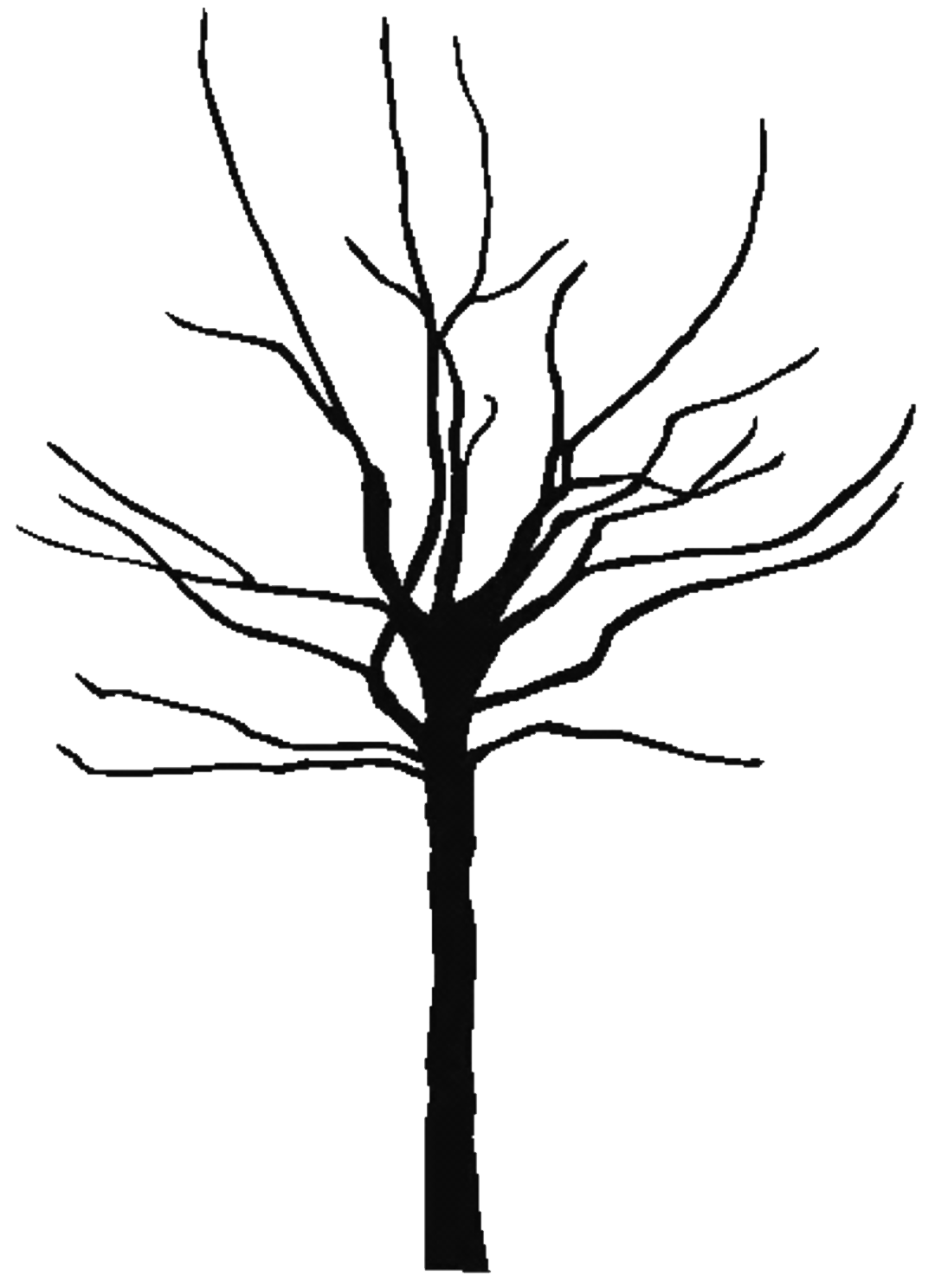 Tree  black and white black tree outline free download clip art on