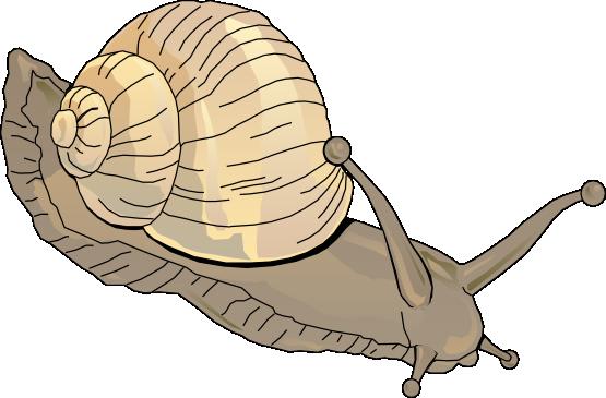 Snail clipart schliferaward