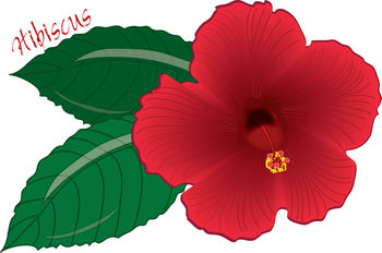 Clip art picture of a red hibiscus flower