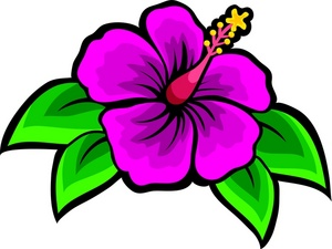 Drawing of beach flower hibiscus clip art images stock