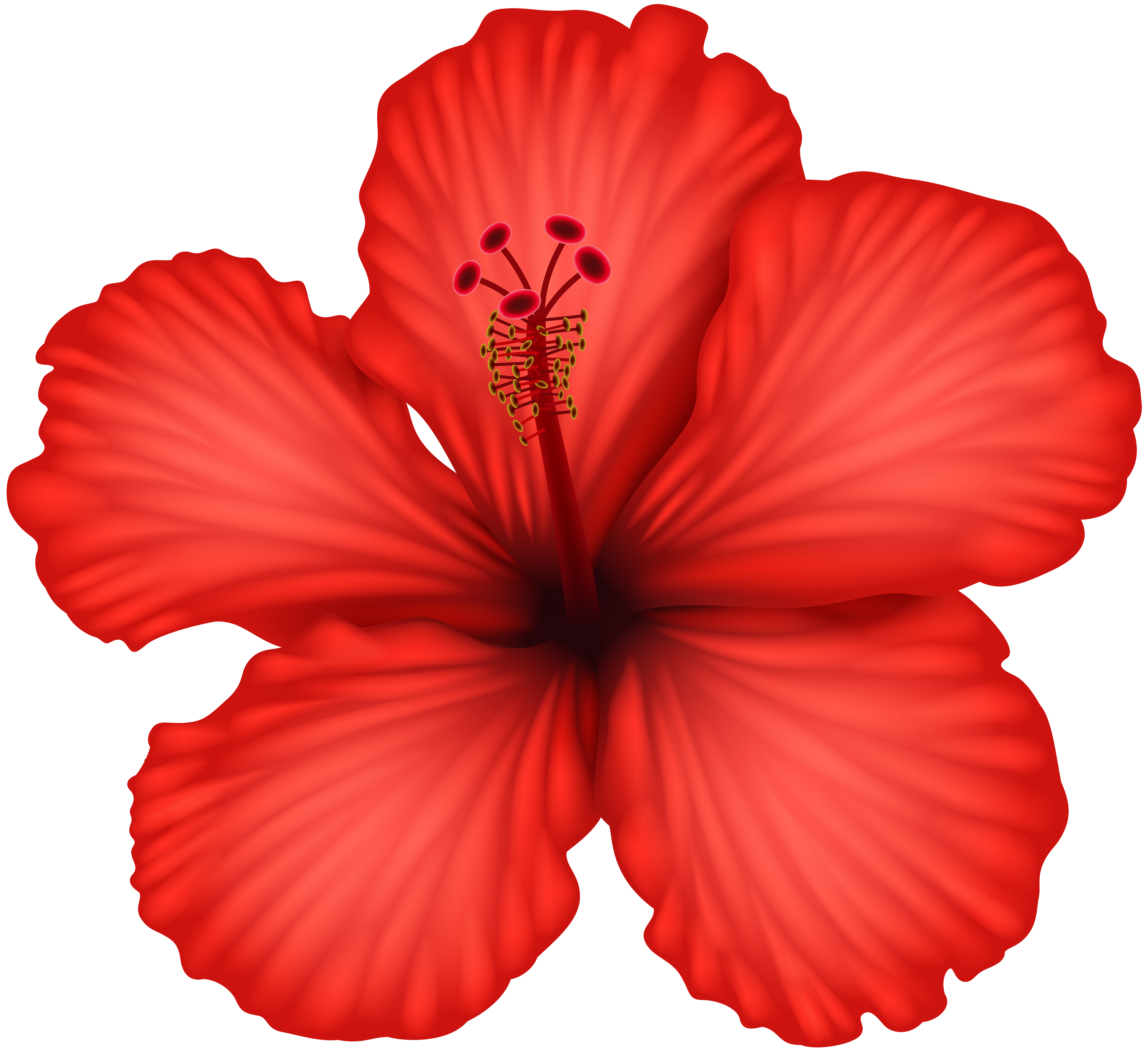 Red hibiscus clip art gallery yopriceville high quality