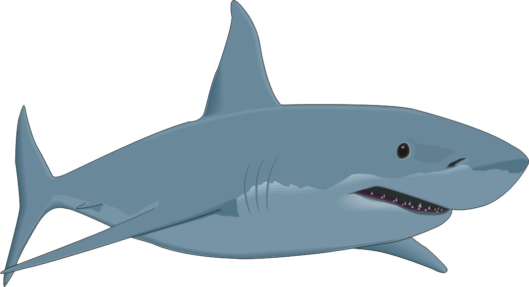 cartoon shark Cartoon great white shark free download clip art jpg