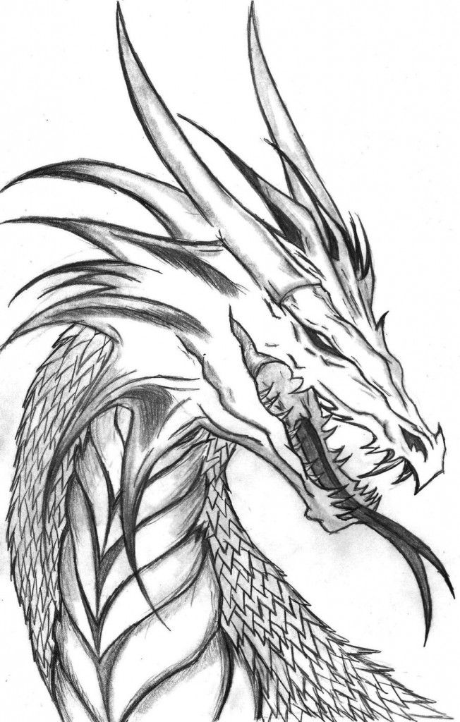 Dragon drawings pictures jpg