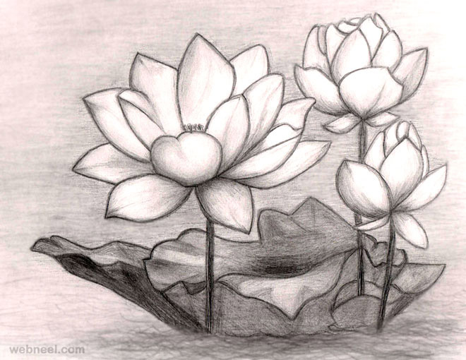 Flower drawings lotus 7 jpg