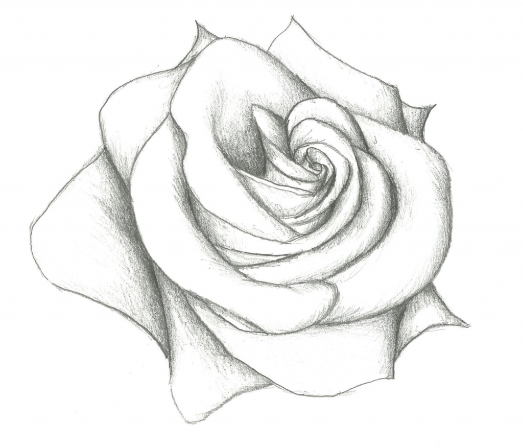 flower drawing Flowers drawings in pencil for kids simple rose jpg