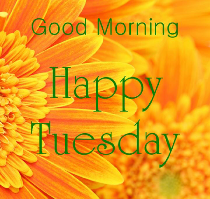 happy tuesday Good morning wishes on tuesday pictures images jpg