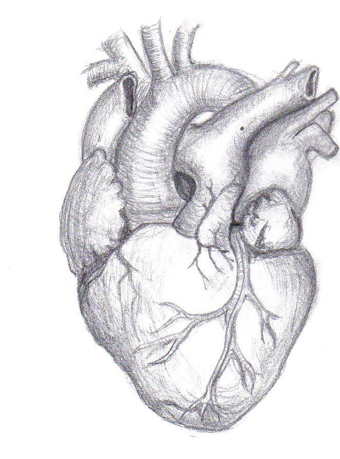 Real heart drawing jpg