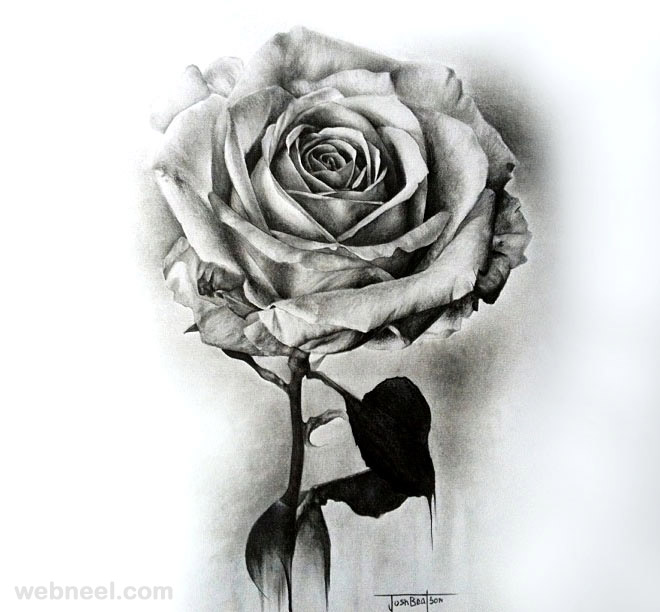 Rose drawing 3 jpg