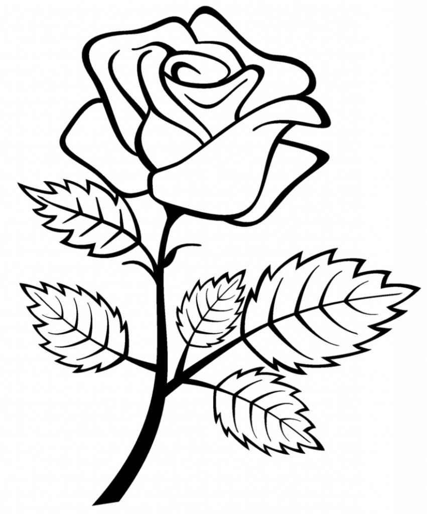 Simple rose drawings free download on jpg