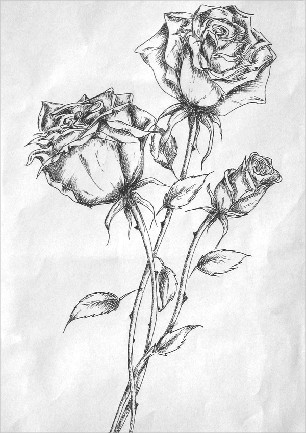Rose drawings free psd ai format download jpg