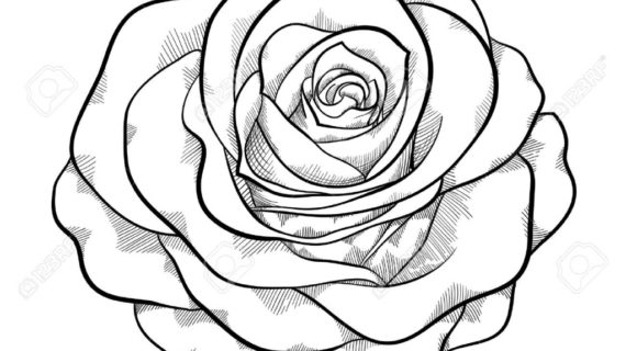 rose drawing Drawings of roses in black and white free download jpg