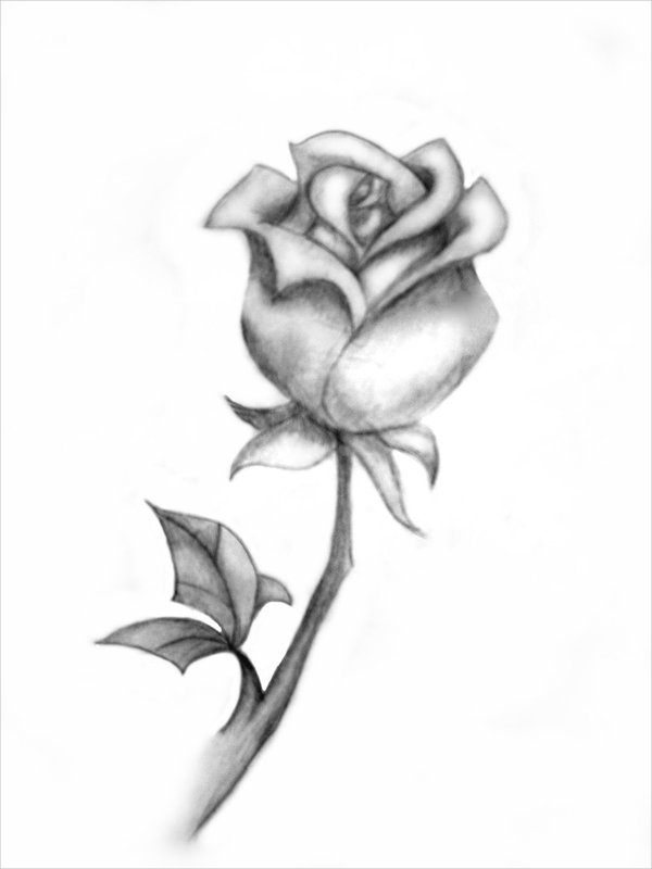 rose drawing Roses drawings rose free psd ai format download jpg