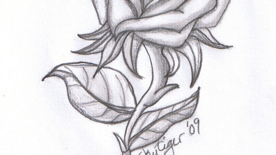Pencil drawing pictures of roses rose drawings jpg