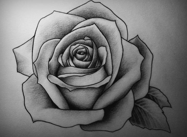 Rose drawings art ideas design trends premium psd jpg